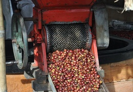 Coffee bean pealing machine