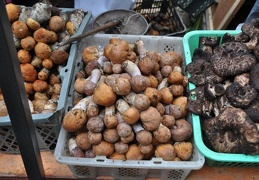 Leccinum, Rozites emodensis / Himlayan Gypsies, and Sarcodon / Hawkswings on the market in Kangding