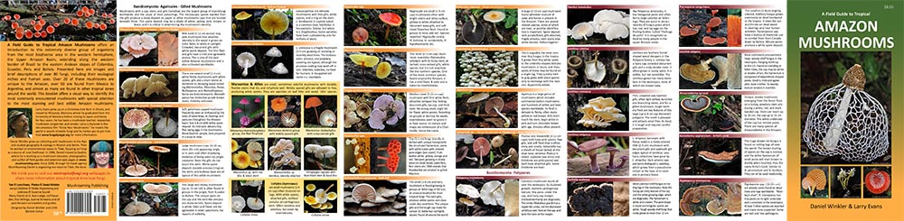 neotropical fungi field guide front