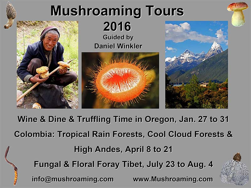 Mushroaming Tours 2016
